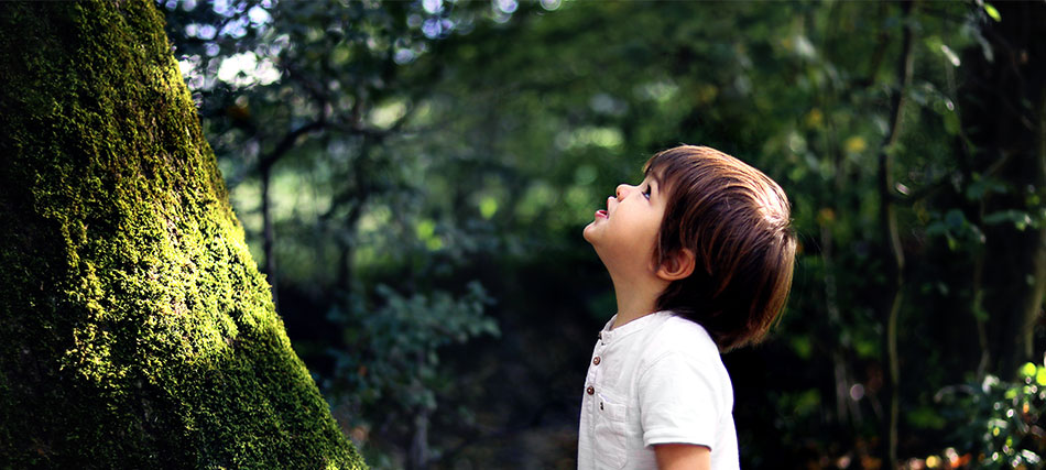 A young child is outdoors staring up a big tree