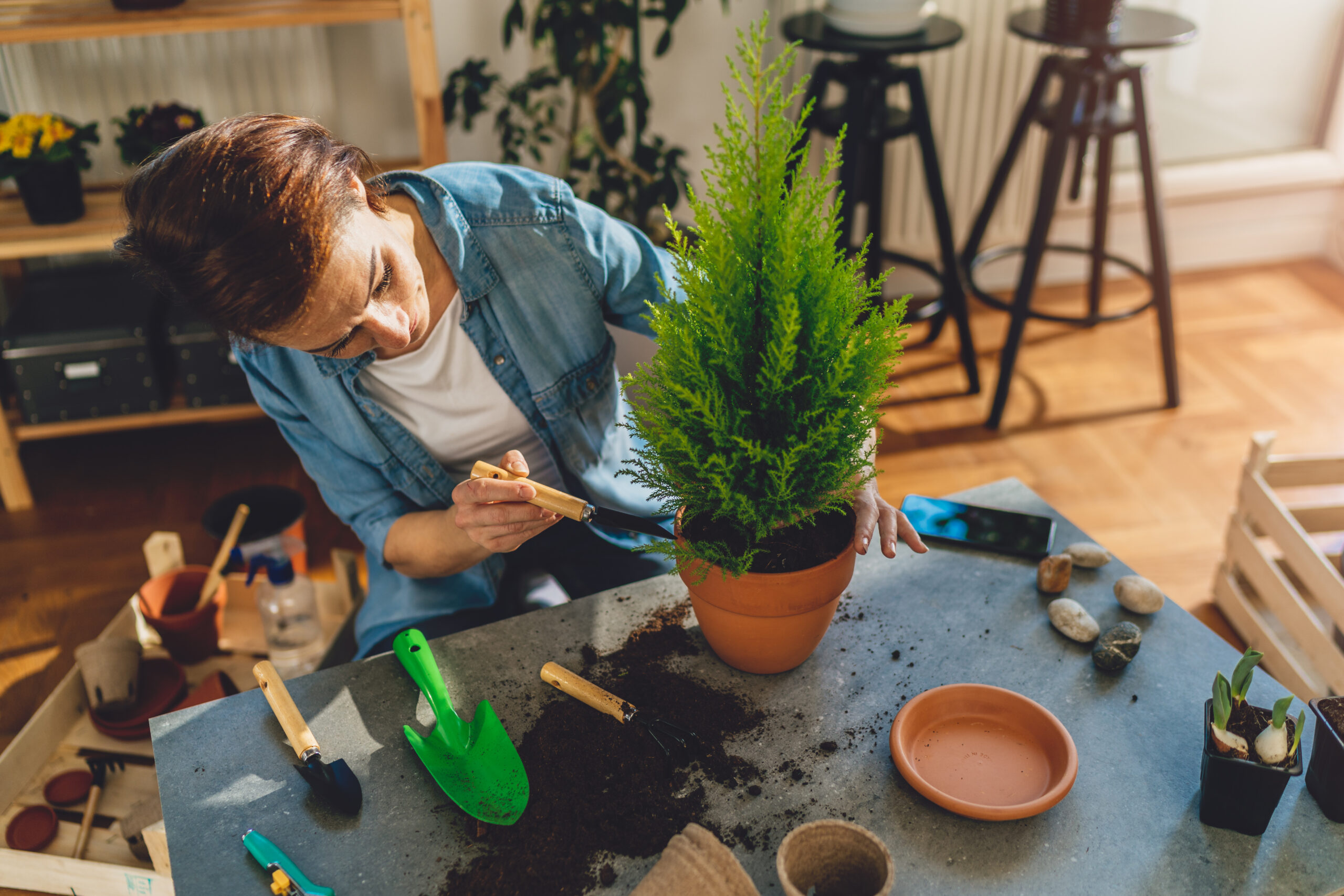 An individual is potting a tree indoors.